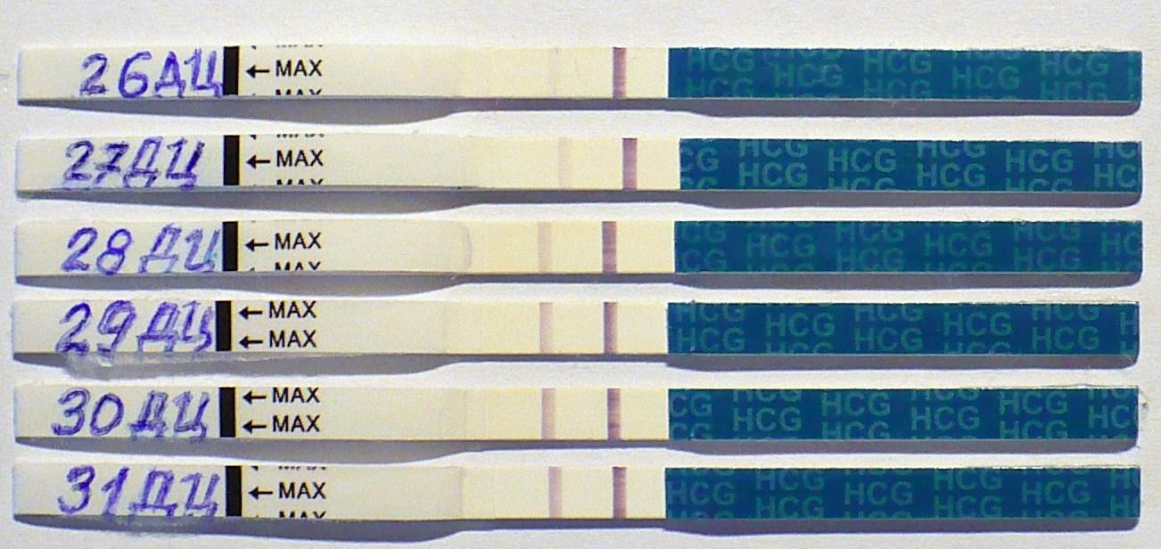 Беременность задержка на 1 день