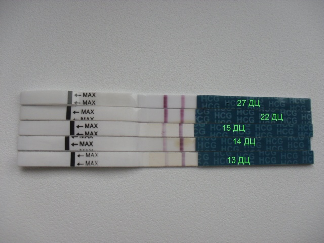 мериноса действительно тест на беременность нет динамики Николаевна 2016-12-19 2014