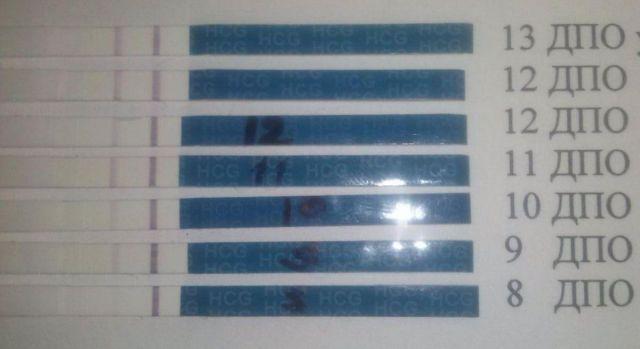 Тесты 7 дпо тестов на беременность