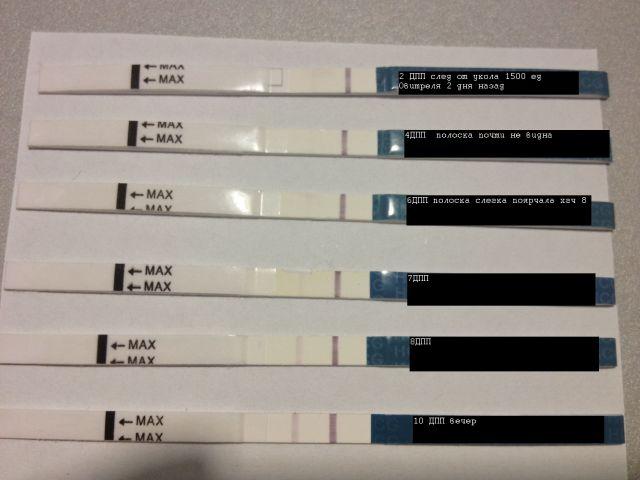 Эко тест на беременность