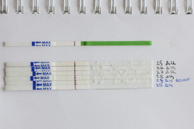 Аскорбиновая кислота при задержке месячных