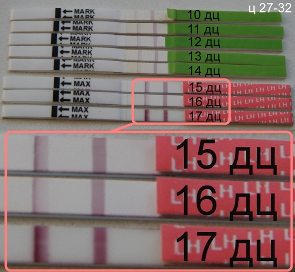 Тест на овуляцию я родился кому помог - 2d98b