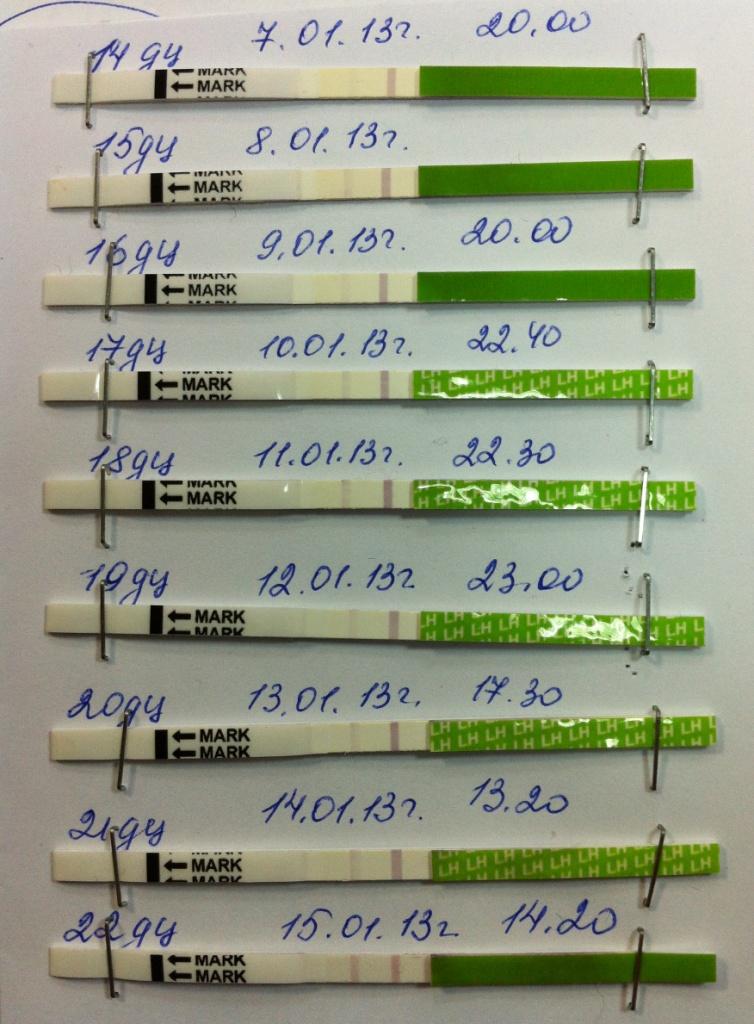 инвитро тесты на аллергены