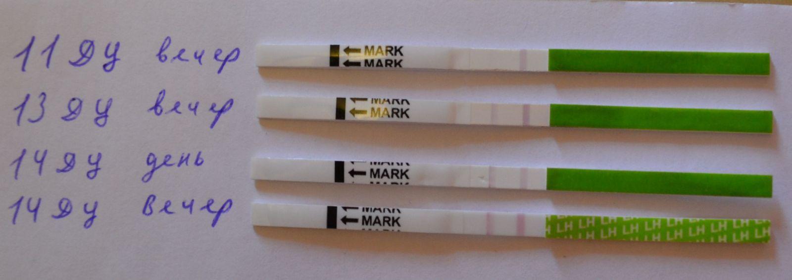 этого остаётся дешевые тесты на овуляцию беременность нас всегда