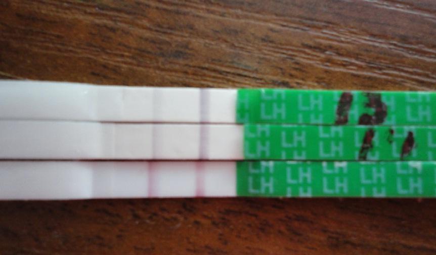 Тест на овуляцию что означает слабая полоска - 1