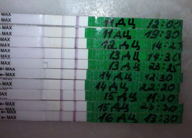 Тест на овуляцию нетфлих - 0