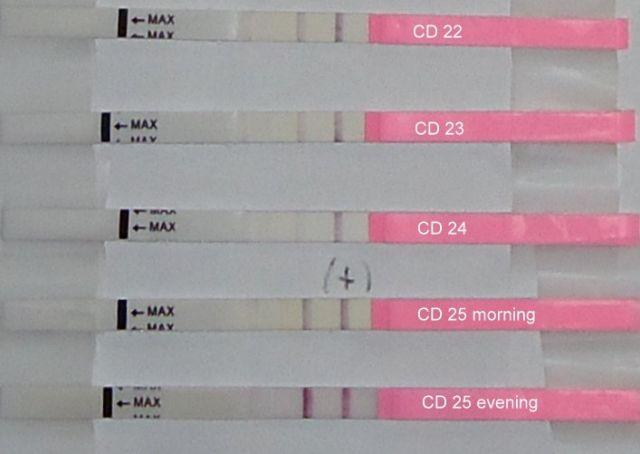 Тест на беременность 24 день цикла