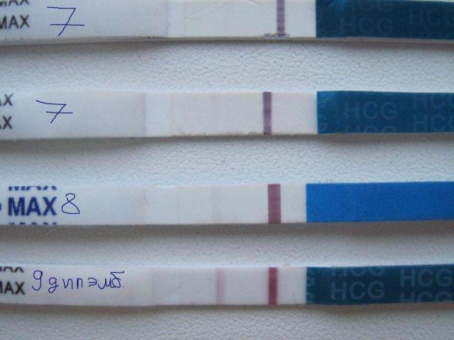 Тест на беременность после переноса