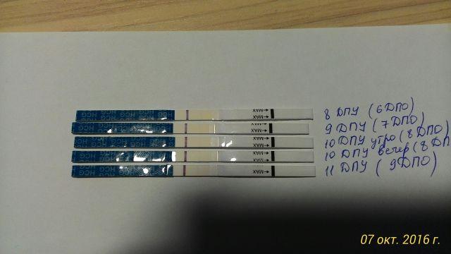 stimulyatsiya-spermatogeneza-hgch