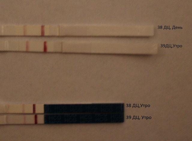 Тест на беременность бб