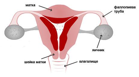 Секс истории за три месяца в период менструации