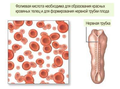 Фолиевую кислоту во время беременности как принимать