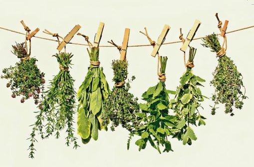 лекарственные травы беременным
