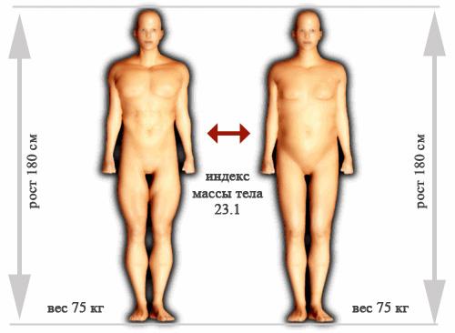 Индекс массы тела и соотношение жира