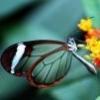 Стеклянная красотка фотография
