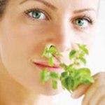 Спорыш лечебные свойства в гинекологии отзывы. Спорыш полезные свойства и противопоказания для женщин и мужчин. Спорыш полезные свойства