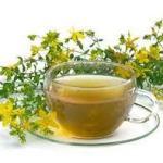 Зверобой трава лечебные свойства и противопоказания для женщин и мужчин
