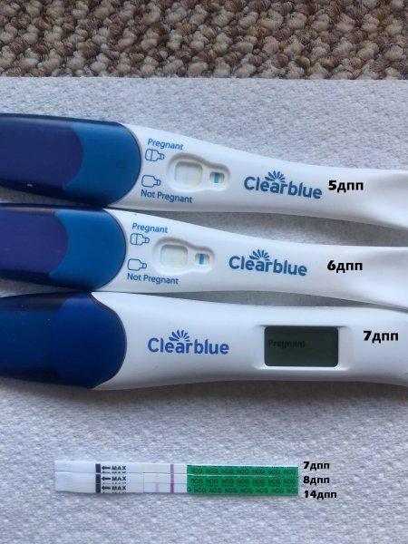 тесты 5 -дневного криоэмбриончика