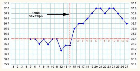 Линия овуляции на графике базальной температуры
