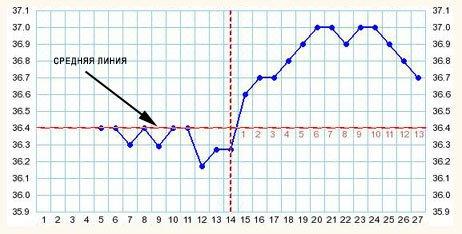 Средняя линия на графике базальной температуры