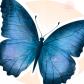 Butterfly988