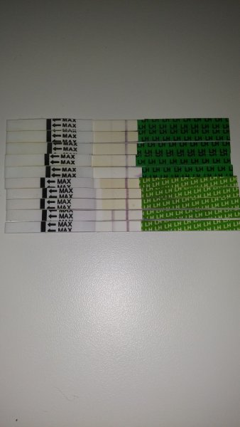 динамика тестов на О с 11-16 дц