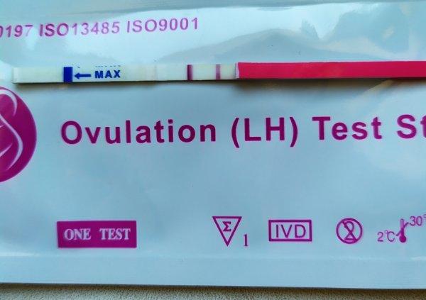 Тест на овуляцию