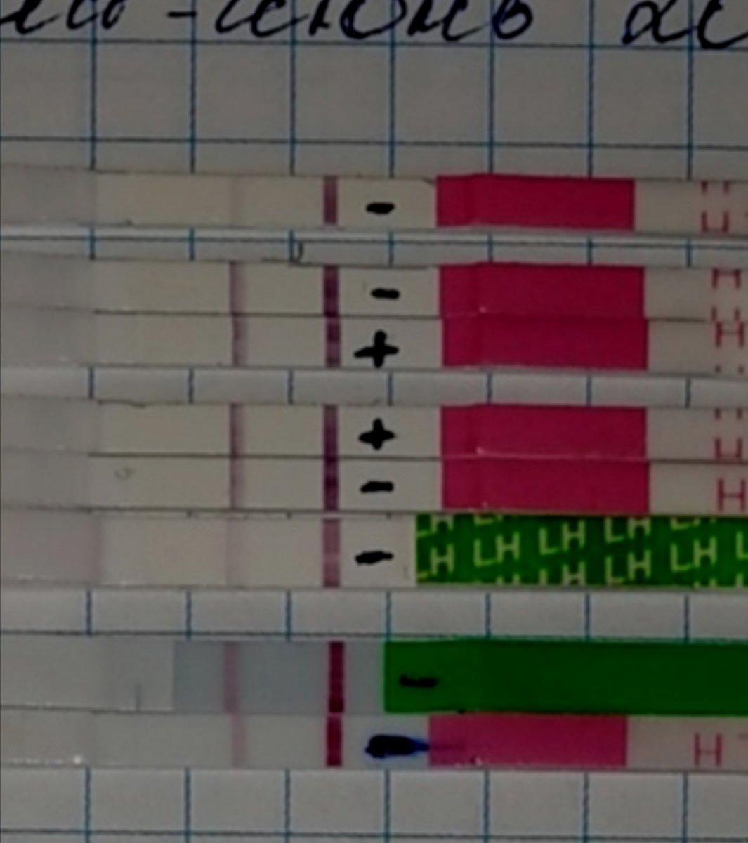 Динамика тестов на овуляцию