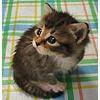 pussycat_marusa