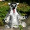 s4astlivij_opossum