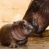 Happy Hippo\\